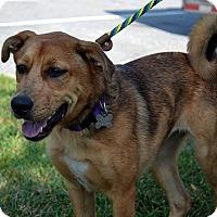 Adopt A Pet :: Frances- MEET HER - Norwalk, CT