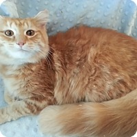Adopt A Pet :: Sharna - Harrisburg, NC
