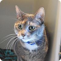 Adopt A Pet :: Baby - Lincoln, NE