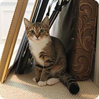 Adopt A Pet :: Adorable Sawyer - Monroe, NC