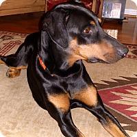 Adopt A Pet :: Ubu - Arlington, VA