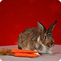 Adopt A Pet :: Tennyson - Marietta, GA