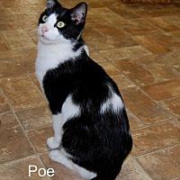 Adopt A Pet :: Poe - Jackson, MS