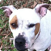 Adopt A Pet :: Sparkle - Memphis, TN