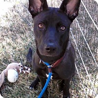 Adopt A Pet :: Delta-So Shy - Olive Branch, MS