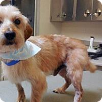 Adopt A Pet :: Douglas - Wildomar, CA