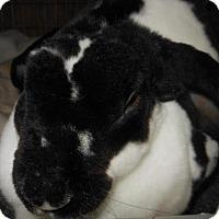 Adopt A Pet :: Ariel - Williston, FL