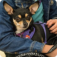 Adopt A Pet :: Lady Bug - Grass Valley, CA