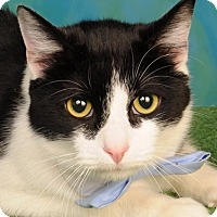 Adopt A Pet :: Tux - mishawaka, IN