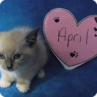 Adopt A Pet :: April - Batesville, AR
