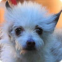 Adopt A Pet :: Nancy - Vernonia, OR