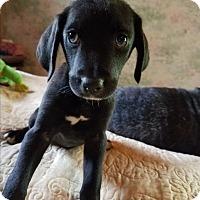 Adopt A Pet :: Fred - Charlestown, RI