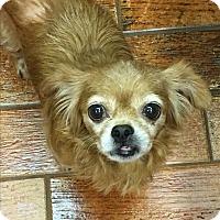 Adopt A Pet :: Pixie - Lehigh, FL