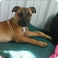 Adopt A Pet :: Scotty - Pottsville, PA