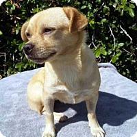 Adopt A Pet :: Sabrina! - New York, NY