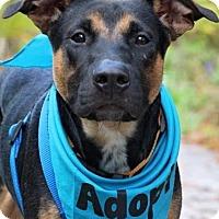 Adopt A Pet :: Carter - Fort Atkinson, WI