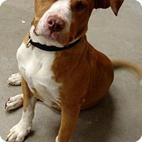 Adopt A Pet :: KGAC #10-13-16-2 Ray Ray - Fredericksburg, VA