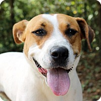 Adopt A Pet :: Lilly - The Woodlands, TX