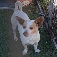Adopt A Pet :: MOCHA - San Pablo, CA