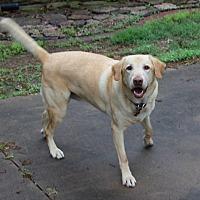 Adopt A Pet :: Duke - Muldrow, OK