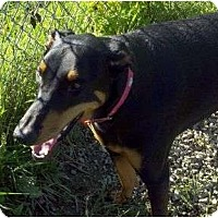 Adopt A Pet :: Rio--adopted!! - New Richmond, OH