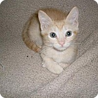 Adopt A Pet :: Dande - Kirkwood, DE