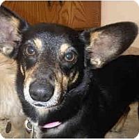 Adopt A Pet :: Sadie - Arlington, TX