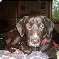 Adopt A Pet :: Jack - North Jackson, OH