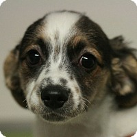Adopt A Pet :: Sunflower - Canoga Park, CA