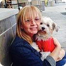 Adopt A Pet :: Sixty