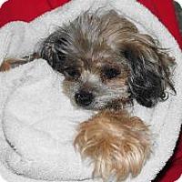 Adopt A Pet :: Katie - LEXINGTON, KY
