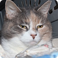 Adopt A Pet :: Candace - Middletown, CT