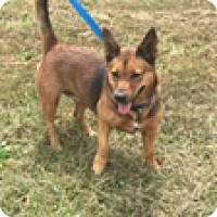 Adopt A Pet :: Queenie - Hatifeld, PA