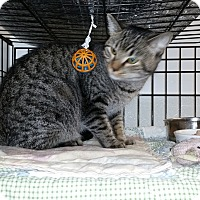 Adopt A Pet :: Chrissy - Forest Hills, NY
