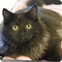 Adopt A Pet :: Yatzee - DFW Metroplex, TX