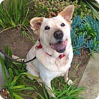Adopt A Pet :: URGENT-Lady-VIDEO - Los Angeles, CA