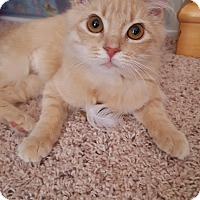 Adopt A Pet :: Charlotte - Stafford, VA