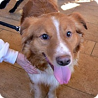 Adopt A Pet :: Andree - Hold - Sparta, NJ