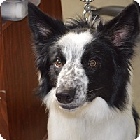 Adopt A Pet :: Phoenix - Kentwood, MI