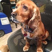Adopt A Pet :: Carly - Santa Barbara, CA