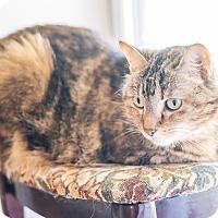 Adopt A Pet :: Phoenix - Cedar Springs, MI