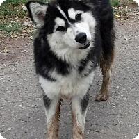 Adopt A Pet :: **KATNISS (KAT) - Peralta, NM