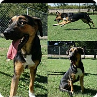 Adopt A Pet :: Jessie - oklahoma city, OK