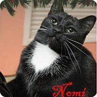 Adopt A Pet :: Nomi - Euclid, OH