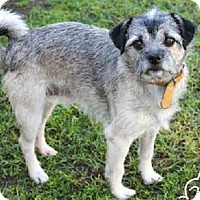Adopt A Pet :: Hemingway - Las Vegas, NV
