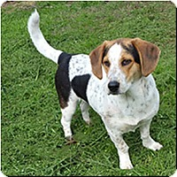 Adopt A Pet :: Lucy - Shreveport, LA