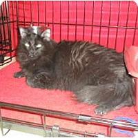 Adopt A Pet :: Missy - Brea, CA