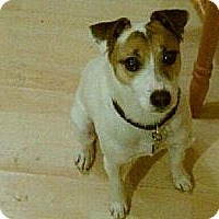 Adopt A Pet :: Soupy - Southampton, PA