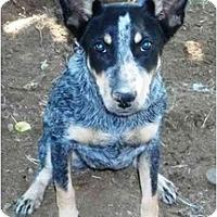 Adopt A Pet :: Daisy Mae *Adoption Pending* - Phoenix, AZ