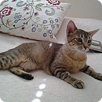 Adopt A Pet :: Sara - Modesto, CA